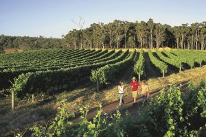 Margaret River Caves Wine and Cape Leeuwin Lighthouse Tour from Perth - Lennox Head Accommodation