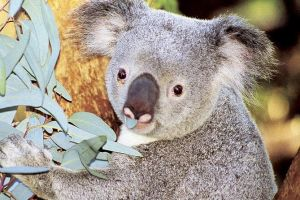 Perth Zoo General Entry Ticket and Sightseeing Cruise - Lennox Head Accommodation