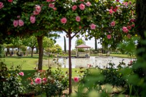 Griffith Spring Fest - Lennox Head Accommodation